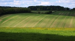 Light Over the Chiltern Hills (cycle.nut66) Tags: new light shadow field grass lines woodland four countryside woods farm chilterns olympus hills soil crop micro crops growing chiltern thirds buttercups evolt hedgerows asheridge epl1 mzuiko