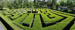 Labirin (niyudz) Tags: green nature garden indonesia outdoor games malang eastjava jawatimur cobanrondo labirin batumalang
