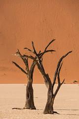 Two Dead Trees (onurbwa51) Tags: red sand desert dunes namibia sossusvlei camelthorntree deadtrees oldtrees deadvlei dryriver namibnaukluftpark acaciaerioloba kameldornbaum several100yearsold
