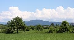 Rieselfeld landscape III (tillwe) Tags: blue green clouds landscape freiburg blackforest tillwe rieselfeld 201605