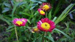 Joy. # # # # # # #Spring #Flowers #Blossom #Nature #Beauty | #VSCO #VSCOFlowers #VSCOCam (igorpo91) Tags: flowers nature beauty spring blossom      vsco  vscocam vscoflowers
