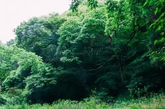 Green (li-penny) Tags: green japan  sendai miyagiken   sendaishi sigma1770mmf2845dcmacrohsm pentaxk3 2016tokyosendaitrip