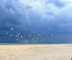 playa tormenta (gladysoriz) Tags: mar playa gaviotas