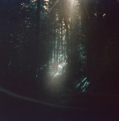 """Let everything thats been planned come true. Let them believe... (liquidnight) Tags: trees oregon analog forest mediumformat lomo lomography woods solitude hiking turquoise toycamera surreal diana stalker dreamy analogue dianaf vignetting pnw treescape dreamscape clatskanie filmphotography andreitarkovsky arkadystrugatsky borisstrugatsky lomochrome lomochrometurquoise lomochrometurquoisexr100400 gnatcreektrail"