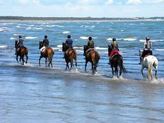 Sun Sea Wind and Horses (alex.gb) Tags: sea horses sun beach wind horsemen italians albarella impressionsexpressions sunseawindandhorses