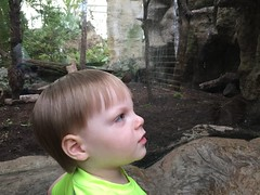 "Paul at the Dallas Aquarium • <a style=""font-size:0.8em;"" href=""http://www.flickr.com/photos/109120354@N07/27244227703/"" target=""_blank"">View on Flickr</a>"