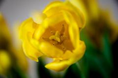 Viewfinder-20 (sven.vansantvliet) Tags: blue shadow sky flower colors yellow fleurs jaune drops weide couleurs schaduw geel bloem druppel tulp kleuren tullip paardebloem boterbloem pisbloem lentebloesembloemenbijhuis
