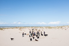 (Peter de Krom) Tags: sea people beach dogs out labrador dunes group hvh