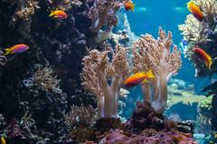 Tropical fish (Infomastern) Tags: fish berlin coral germany deutschland aquarium tyskland fisk akvarium korall berlineraquarium aquariumberlin