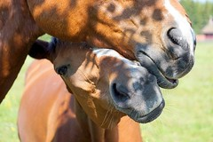 Good friends. (janrs7) Tags: friends summer two horses love couple friendship july