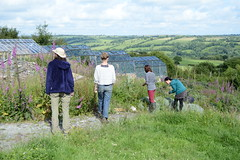 The glasshouses on Jasmine's plot with four participants, view of the valley in the background (Permaculture Association) Tags: wales gathering ecovillage permaculture 2016 lammas cyrmu paramaethu