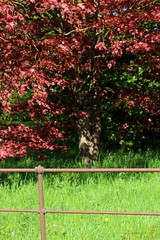 Fence (Pat's_photos) Tags: westonbirt tree fence hff