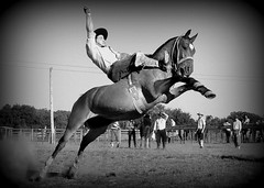 Luiz Assumpo (Eduardo Amorim) Tags: brazil horses horse southamerica brasil criollo caballo cheval caballos cavalos pferde cavalli cavallo cavalo gauchos pferd riograndedosul pampa hest hevonen campanha brsil chevaux gaucho  amricadosul bag fronteira hst gacho  amriquedusud  gachos  sudamrica suramrica amricadelsur  sdamerika crioulo caballoscriollos criollos jineteada   americadelsud gineteada  crioulos cavalocrioulo americameridionale caballocriollo eduardoamorim cavaloscrioulos