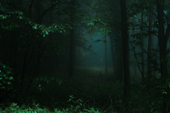 Dark Mist in the Woods (Netsrak) Tags: trees light mist tree green nature leaves fog forest dark de deutschland licht leaf spring woods nebel darkness outdoor natur eifel grn blatt wald bltter bume baum nordrheinwestfalen dunkel frhling dunkelheit rheinbach forst