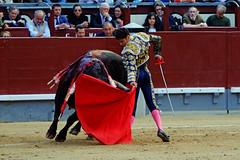 Posada de Maravillas, Feria de San Isidro (Fotomondeo) Tags: espaa spain bull bullfighter toros bullfight toro bullring matador torero plazadetoros corridadetoros lasventas posadademaravillas fujifilmxm1