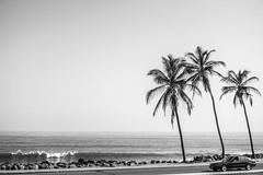 Top gear (1jonathan1) Tags: ocean road street old sea sky blackandwhite seascape tree blancoynegro nature car skyline palms coast mar town ride cielo topgear cartagenadeindias