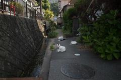 peace of mind (kasa51) Tags: japan cat alley sleep narrow izu shimoda  peaceofmind izupeninsula