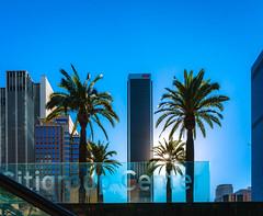 Sunsetting Palms - Flower St (axi11a) Tags: ca sunset sky palms la losangeles palm
