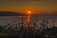 Setting sun and wild flowers (nikhrist) Tags: lake greece wildflowers settingsun aetoloakarnania trichonida nickchristodoulou