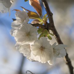spring (Cosimo Matteini) Tags: flower tree london pen spring olympus m43 mft ep5 cosimomatteini mzuiko45mmf18