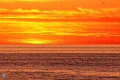 Peaceful (ahmed_eldaly) Tags: california usa nature birds landscape photography sandiego wildlife birding pacificocean digitalcameraclub egyptianphotographer