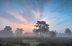 5:35 (Guido de Kleijn) Tags: holland netherlands sunrise landscape otterlo hogeveluwe nikon1224 nikond500 guidodekleijn
