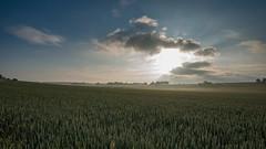 Happy midsummer! (jarnasen) Tags: morning sky copyright cloud sun sunlight mist field clouds sunrise landscape early nikon midsummer sweden schweden farmland crop handheld sverige nikkor scandinavia d810 nordiclandscape 1635mmf4 jarnasen jrnsen