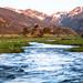 A River Runs Through It - 1st Place Novice - Larry Parker