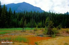 Canada: Kootenay National Park: Paint Pots (mariofalcetti) Tags: park trees parco canada mountains water alberi montagne landscape acqua kootenay