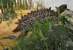 2016-03-06_0767n_mercercounty (lblanchard) Tags: education topiary turtle critters mercercounty 2016flowershow