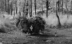 Local Transport (Nam__b) Tags: road travel trees blackandwhite bali nature rural forest indonesia nikon village outdoor motorbike local nikkor d500 villager kintamani afsdxnikkor18200mmf3556gedvrii