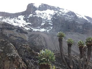 View of Uhuru Peak from the Alpine Desert