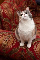 _NCB8971.jpg (Our Poopy Pants) Tags: hairy pet cats cat fur furry kat feline chat feather kitty whiskers gato kitties meow katze paws puss cass kot gat koka kass katt kato kissa maka paka  furballs katu conmo