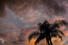 Warm Skies, Cool Evenings (Jason Sha'ul) Tags: blue sunset red sky orange black rain weather yellow clouds evening nikon colorful florida cloudy dusk palmtrees thunderstorm leesburg nikkor dslr humid centralflorida nikkorlenses d7100 18mm105mm floridanights warmskiescoolevenings jasonshaul trendsetterdevelopments