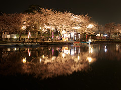 (RM) Over to Takada Park for Hanami (2013:087) (Moonie's World) Tags: longexposure nightphotography travel trees vacation plant flower reflection tourism nature water beautiful japan season outdoors spring pond flora quiet view personal illumination peaceful nobody illuminated nighttime  cherryblossom  sakura moat japaneseculture touristattraction hanami temporal springtime blooming rm tranquilscene eastasia  cherryblossomviewing nolens japanesecastle traveldestinations beautyinnature alamy  niigataprefecture japanesetradition stockcategories    takadacastle joetsucity springapril2013 joetsushi takadakoencherryblossomfestival takadacastleparkcherryblossomviewingfestival boatingarena