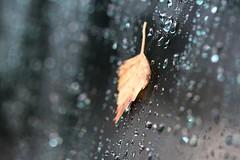 Fall... (Mah Nava) Tags: autumn fall rain leaf drops bokeh herbst blatt regen tropfen