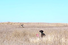 "BRW Field Day - Benelli • <a style=""font-size:0.8em;"" href=""http://www.flickr.com/photos/66999112@N00/11201375356/"" target=""_blank"">View on Flickr</a>"
