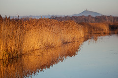 Somerset Levels (Mark Eastment) Tags: winter wild lake reflection nature water reeds landscape seasons glastonbury somerset landmark naturereserve wetlands tor glastonburytor reedbeds somersetlevels hamwall