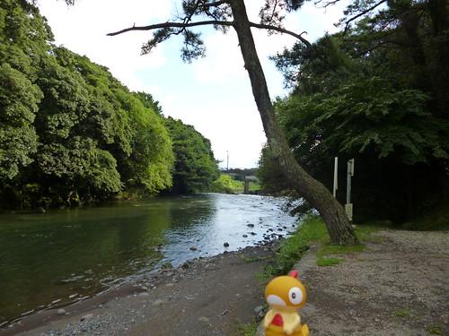 Scraggy in Susono, Shizuoka 8 (Goryu Falls)