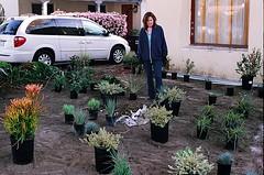 04560020-84 (jjldickinson) Tags: plant garden landscaping longbeach wrigley olympusom1 droughttolerant xeriscaping fujicolorsuperiaxtra400 lawntogarden promastermcautozoommacro2870mmf2842 promasterspectrum772mmuv johannawoollcott roll490o2