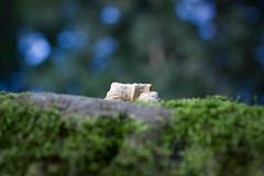 Hide & Seek (zikmund.david) Tags: leave september hide seek canoneos50d sigmaaf5028dgmacro