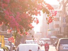 #sunset #flowers (funkyruru) Tags: life flowers taiwan streetscene taipei murmur 花 olympusomdem5 mzuikodigitaled75mmf18