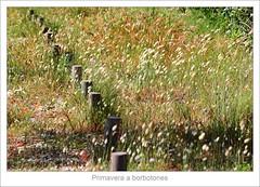Primavera a borbotones (Tete07) Tags: life flowers green primavera spring wind alive