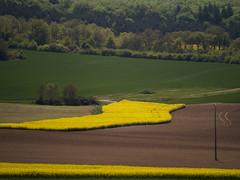 Lumière colza 6 (afantelin) Tags: jaune terre bourgogne champ yonne burgondy champignysuryonne