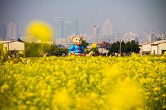 (Eddy_TW) Tags: taiwan taichung 台灣 台中 油菜花 台中市 南屯區 地景藝術節 迷失小熊