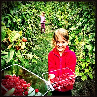 049/365 • we're doing some berry picking at Bramble Farm - mostly raspberries 💕 • #049_2015 #langwarrin #7yo #4yo #berries #picking #raspberries #summer
