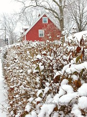 A Red House & the Snow (De Justice) Tags: winter snow garden connecticut newengland redhouse newhaven winterwonderland winterscenery