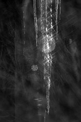 Comp-1-BW (Daxcat) Tags: winter light cold ice glitter icicle icesickles