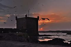 magic (s@brina) Tags: ocean sunset color gulls flight marocco fortress essaouira gabbiani oceano