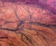 Creek beds @ 35000 feet || Exmouth (David Marriott - Sydney) Tags: tree creek bed roots australia aerial western wa 100 fokker